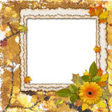 Frame with  flower on the autumn background. Frame with leaves and orange flower on the autumn background Royalty Free Stock Photos