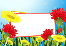 Frame_in_the_flower_field Immagine Stock