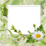 Frame with flower on the green background. White frame with ribbon and flower on the green background Stock Photography