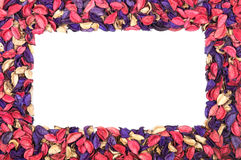Frame of flower petals. On white background stock image