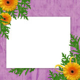 Frame with flower on the violet background. White frame with flower and ribbons on the violet background Royalty Free Stock Image