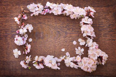 Frame with flowering branches on wooden board Royalty Free Stock Photos