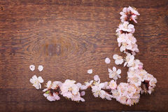 Frame with flowering branches on wooden board Royalty Free Stock Image
