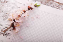 Frame with flowering branches on wooden board Stock Photos
