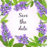 Frame Flowering sage. Royalty Free Stock Photo