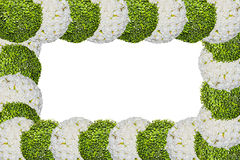 Frame of flowers Royalty Free Stock Images