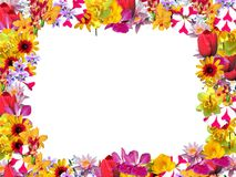 Frame flowers Stock Photos