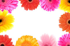 Frame of flowers. Daisy flowers frame and space for messages stock photos