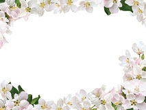 Frame from flowers of an apple-tree Royalty Free Stock Photos