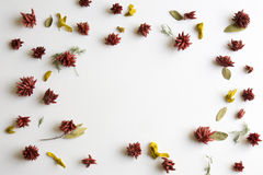 Frame flowers background,  Royalty Free Stock Images
