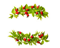 Frame of  flowers, berries and green leaves on a white backgrou Stock Photos