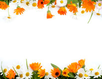 Frame of flowers Stock Images