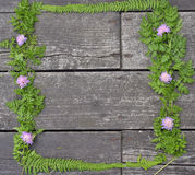 Frame with flowers clover and  fern leaves Royalty Free Stock Photo