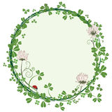 Frame with flowers of clover Stock Photos