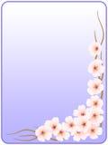 Frame_flowers de um cherry_blue Foto de Stock Royalty Free