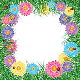 Frame of flowers and herbs with ladybird Royalty Free Stock Photos