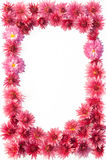 Frame of flowers Royalty Free Stock Photography