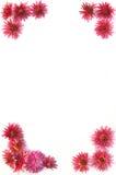 Frame of flowers Stock Photos