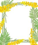 Frame of flowers, leaves and branches of mimosa in yellow and green colors on a white background
