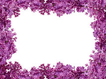 Frame from flowers of a lilac Royalty Free Stock Image