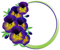 Frame of flowers pansies Stock Image