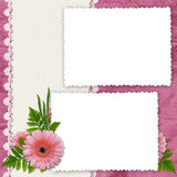 Frame with flowers on the pink background. White frame with flowers and plants on the pink background Stock Image