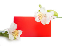 Frame flowers with a red piece of paper background place for your text Stock Photography