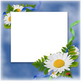 Frame with flowers and ribbons on the blue. White frame with the bouquet of flowers and ribbons on the blue background Royalty Free Stock Image