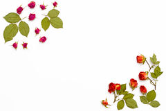 Frame from flowers roses on a white background. Flower pattern for greeting cards for birthday, wedding, mother`s day, Valentine`s Royalty Free Stock Photo