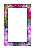 Frame of flowers Stock Photo