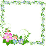 Frame from flowers Royalty Free Stock Images