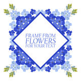 Frame of flowers for text. Blue flowers Delphinium. On white background Stock Images