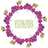 Frame of flowers for text. Crimson flowers Delphinium. On white background Stock Images