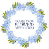 Frame of flowers for text. light blue Flowers Delphinium. On white background Stock Images