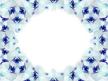 Frame of flowers. turquoise blue and white flowers gathered in a circle on a white background. for design. Card for the holiday. Nature Stock Image