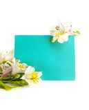 Frame flowers with a turquoise piece of paper background place for your text Royalty Free Stock Images