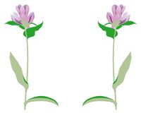 Frame flowers (vector). Frame with vegetable ornaments made to the computer Royalty Free Stock Image