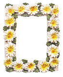 Frame with flowers on white background Royalty Free Stock Images