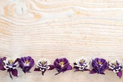 Frame with flowers. Royalty Free Stock Photos