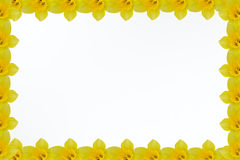 Frame of flowers Royalty Free Stock Photo
