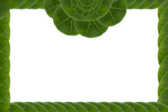 Frame  form leaf. Royalty Free Stock Photography