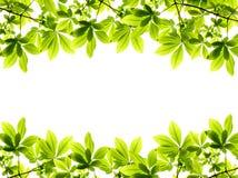 Frame fresco verde das folhas fotografia de stock royalty free