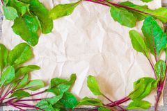 Frame of fresh beetroots leaves Royalty Free Stock Photography