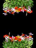 Frame of bright summer flowers on black background. Festive floral template. Greeting card design. Top view. Frame of fresh bright summer flowers on black royalty free stock photography