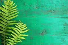 Frame from fresh fern leaves on old painted turquoise wooden bac. Kground with copy space. Border is left. Place for text. Top view Royalty Free Stock Photography