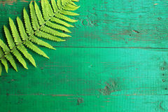 Frame from fresh fern leaves on old painted turquoise wooden bac. Kground with copy space. Border is top left corner. Place for text. Top view Royalty Free Stock Images