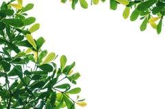 Frame Of Fresh Green Leaves Stock Photo