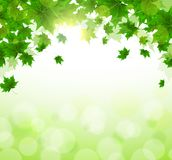 Frame of fresh green leaves of maple. Sunny spring or summer day. Awakening of nature. Cover or background for an article. Copy space royalty free illustration
