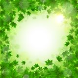 Frame of fresh green leaves of maple. Sunny spring or summer day. Awakening of nature. Cover or background for an article. Copy space vector illustration