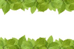 Frame of fresh green leaves with space for design. On white background stock images